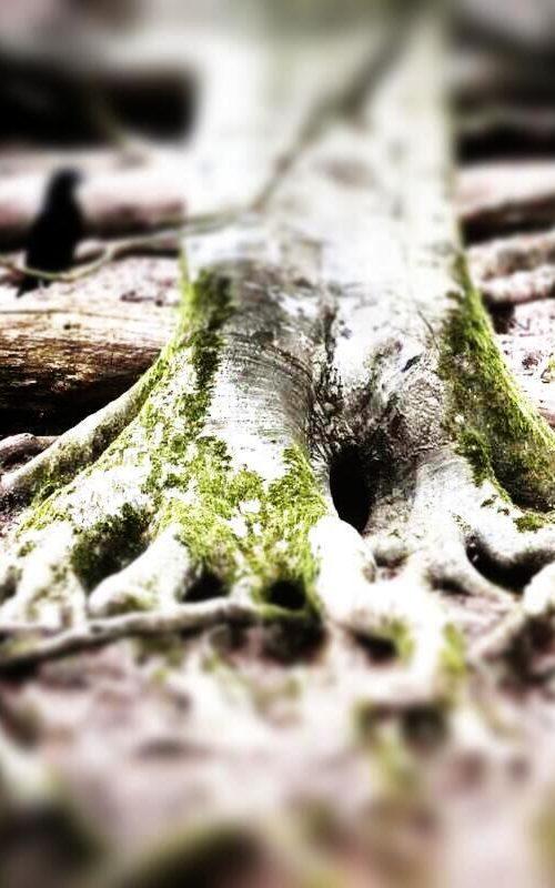 Nahtoderfahrungen - Rabe bei Baum